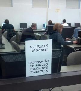programiści to płochliwe zwierzęta